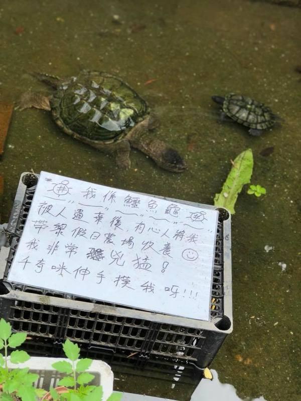 戶外玩樂 上水 Hong Kong hk 香港 玩樂活動 假日農場 Holiday Farm 適合 0 至 100 人