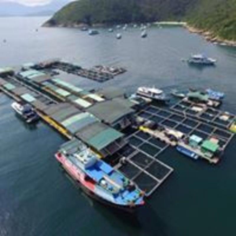 戶外玩樂 西貢 Hong Kong hk 香港 玩樂活動 滘西灣魚排 適合 0 至 100 人