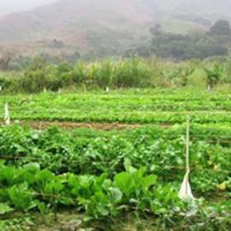 親親大自然 上水 Hong Kong hk 香港 玩樂活動 樂活有機農莊 適合 0 至 100 人