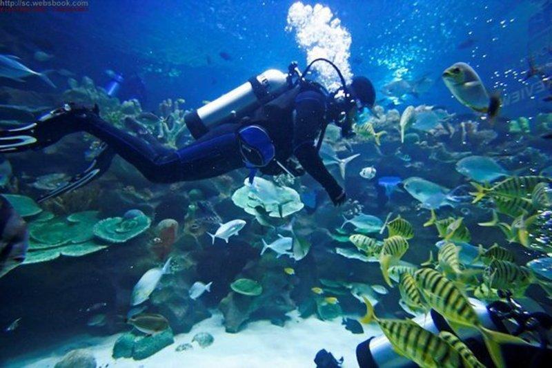戶外玩樂  Hong Kong hk 香港 玩樂活動 PADI 開放水域潛水員 適合 1 至 10 人