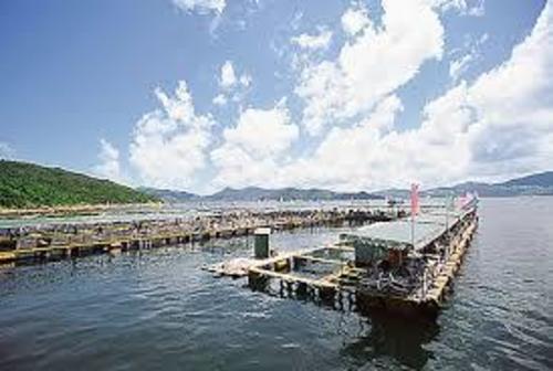 戶外玩樂 西貢 Hong Kong hk 香港 玩樂活動 場地 滘西灣魚排 適合 0 至 100 人