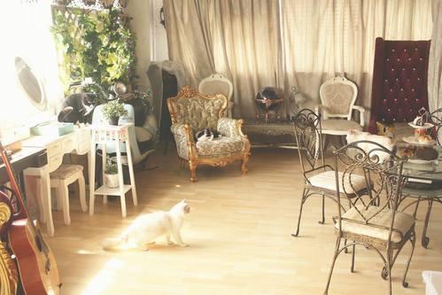 Party Room 觀塘 Hong Kong hk 香港 玩樂活動 場地 貓托邦 適合 0 至 100 人